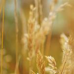 11 Daftar Gaji Pokok PNS 2012 Terbaru