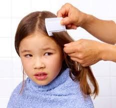 menghilangkan kutu rambut Cara Menghilangkan Kutu Rambut