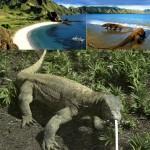 Pulau Komodo 150x150 Siapa Tobi Itu Sebenarnya