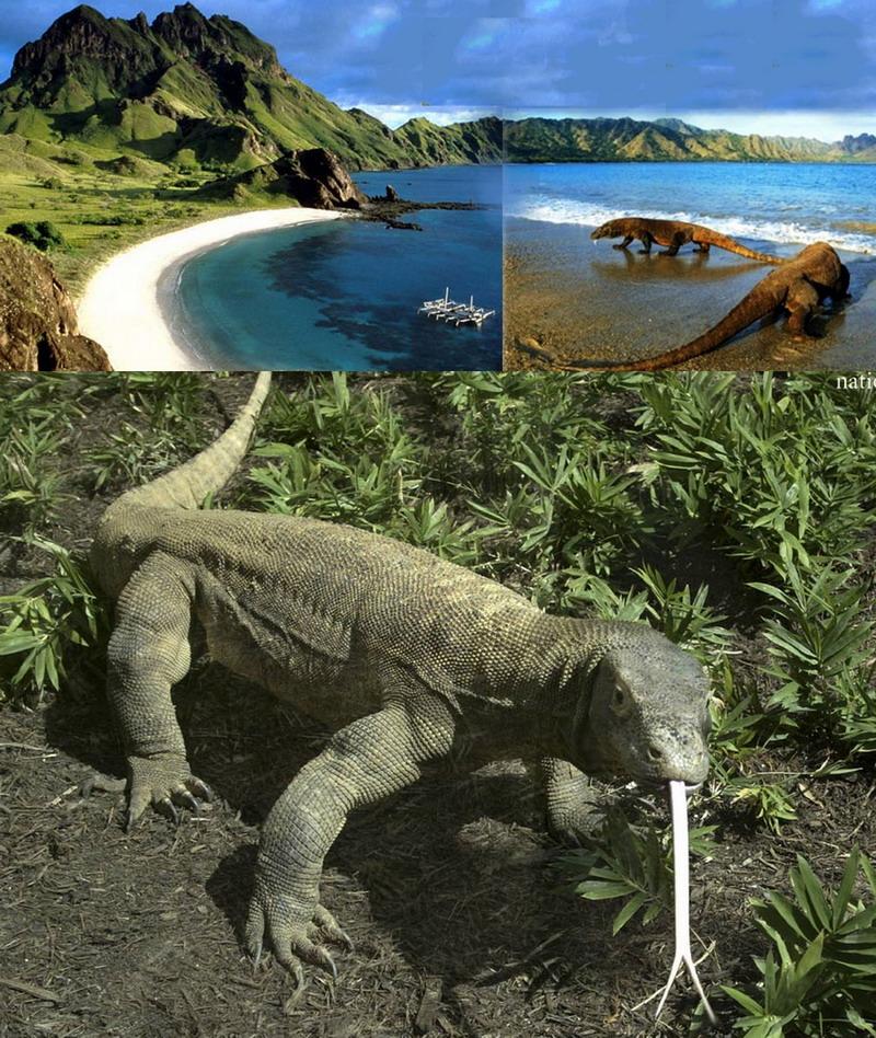 Pulau Komodo 9 Tempat Wisata Paling Indah di Indonesia