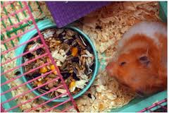 Tips Memilih Makanan Hamster